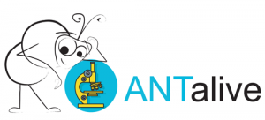 logo_antalive